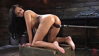 busty lily lane fucked by machines